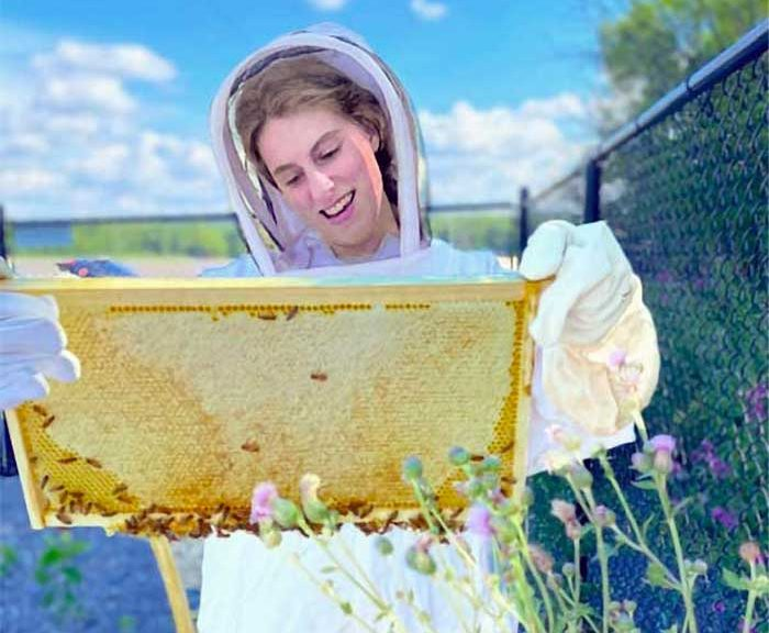 A person inspects a beehive frame