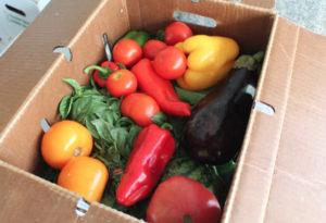 BrainFeeders student organization brings CSA, fresh produce to campus this Fall